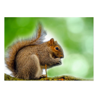 Squirrel Pack Of Chubby Business Cards