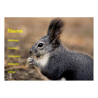 Squirrel Business Card Templates