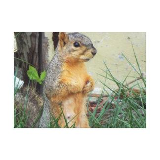 squirrel canvas