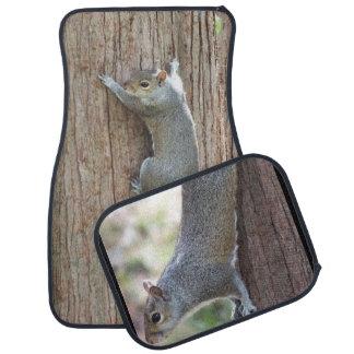 Squirrel Car Mats Floor Mat