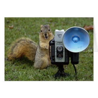 squirrel card large 100
