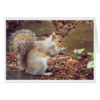 Squirrel Cards