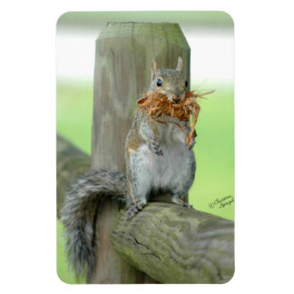 Squirrel carrying twigs Flexi Magnet