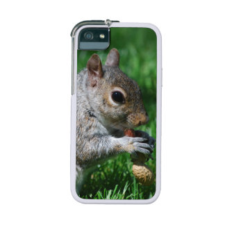 Squirrel Cover For iPhone 5