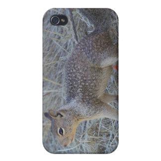 Squirrel Case for iPhone 4