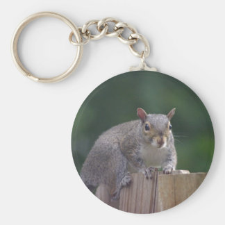 Squirrel Caught In the Act Product Series Keychains