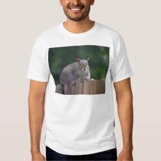 Squirrel Caught In the Act Product Series Tshirts