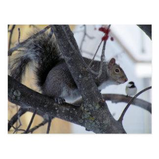 Squirrel/Chickadee Postcard