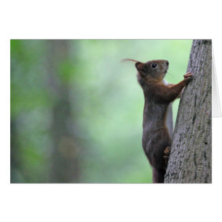 Squirrel climbing a tree greeting cards