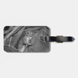 squirrel climbing ficus tree bw bag tag
