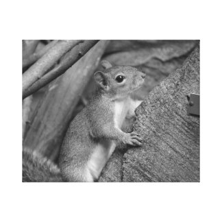 squirrel climbing ficus tree bw canvas print