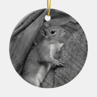 squirrel climbing ficus tree bw Double-Sided ceramic round christmas ornament