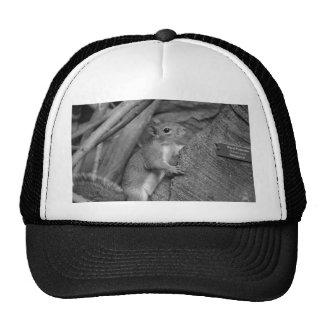 squirrel climbing ficus tree bw trucker hat