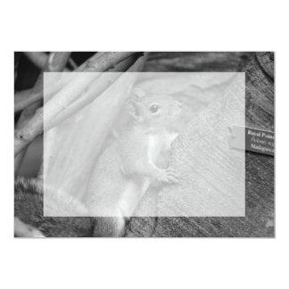squirrel climbing ficus tree bw 5x7 paper invitation card