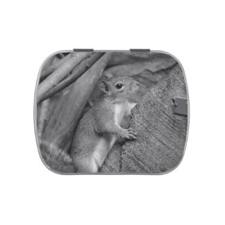 squirrel climbing ficus tree bw jelly belly tins