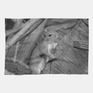 squirrel climbing ficus tree bw kitchen towel