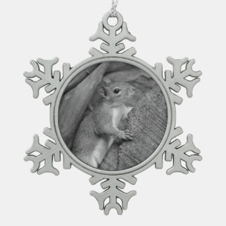 squirrel climbing ficus tree bw ornaments