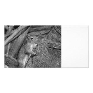 squirrel climbing ficus tree bw photo cards