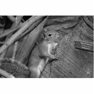 squirrel climbing ficus tree bw standing photo sculpture