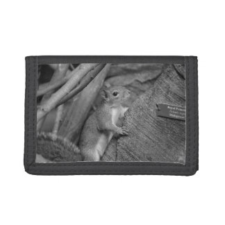 squirrel climbing ficus tree bw wallets