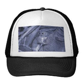 squirrel climbing tree blue animal cute mesh hat