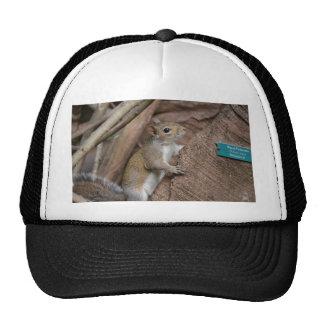 squirrel climbing tree cute animal color hat