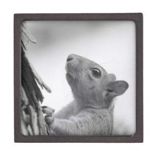 Squirrel Climbing Tree Premium Keepsake Box