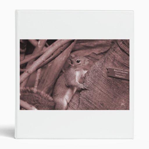 squirrel climbing tree reddish animal 3 ring binder