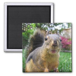 Squirrel Closeup Fridge Magnet