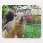 Squirrel Closeup Mouse Pad