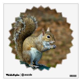 Squirrel Closeup photo Wall Sticker