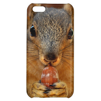 Squirrel Closeup with Nut 2 Case For iPhone 5C