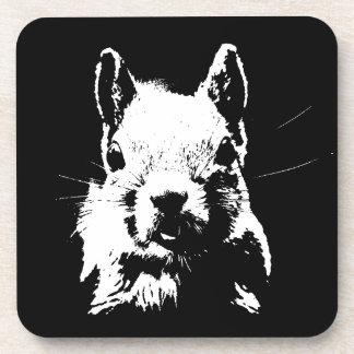 Squirrel Coaster