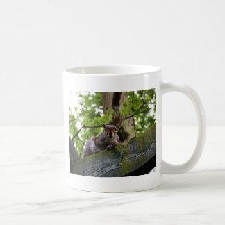 Squirrel Coffee Mugs