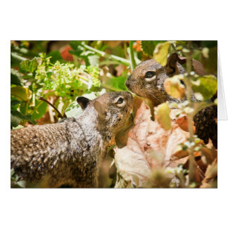 Squirrel Couple Greeting Cards