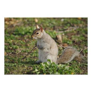 Squirrel Cradling Nuts Photo Print