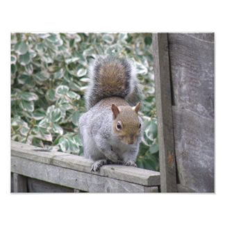 Squirrel Crouching on Ivy Covered Fence Photo