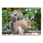 Squirrel Cutie Cards