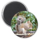 Squirrel Cutie Fridge Magnet