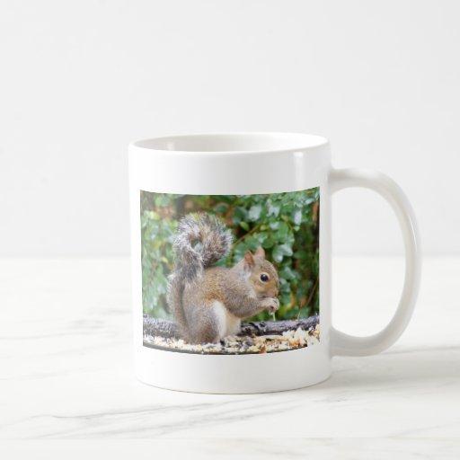 Squirrel Cutie Mugs