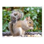 Squirrel Cutie Post Card