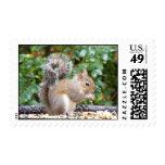 Squirrel Cutie Postage Stamps