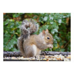 Squirrel Cutie Print