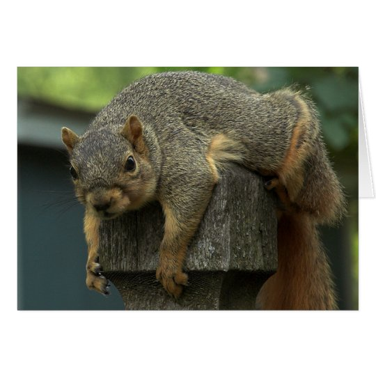 Squirrel Day Afternoon Card