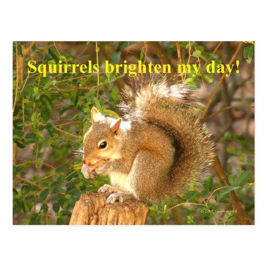 Squirrel Day Brightener Postcard