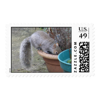 Squirrel Digging up the Flowers Postage Stamp