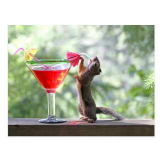 Squirrel Drinking a Cocktail at Happy Hour Post Card