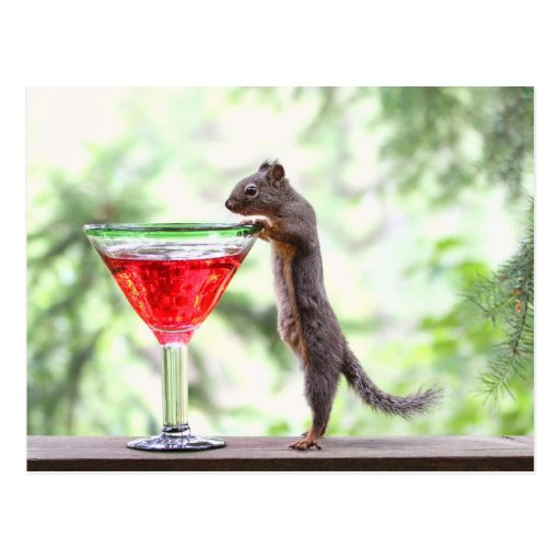 Squirrel Drinking a Cocktail Postcards