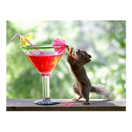 Squirrel Drinking Cocktail Postcard