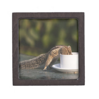 Squirrel drinking from coffee cup at Indian Keepsake Box